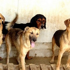 Cani, canili e ambientalisti: dalle proteste alle carte