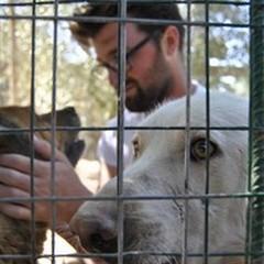 """Canile  """"Lillo & Lillo """": arrivano gli ospiti del Dog's Hostel di Trani"""