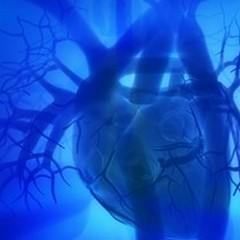 Cellule che fanno battere il cuore