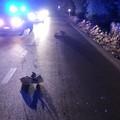 Auto investe grosso cinghiale sulla strada che da Andria porta a Castel del Monte