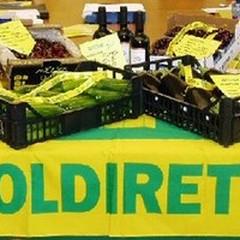 Recupero di varietà rare di olivi: un convegno ad Andria