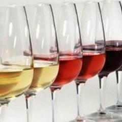 Arriva il corso per assaggiatori di vino a cura dell'Onav Bat