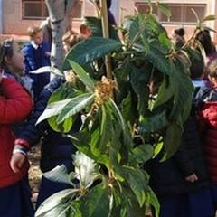 """Festa dell'albero anche all'I.C. """"Don Bosco-Manzoni"""""""