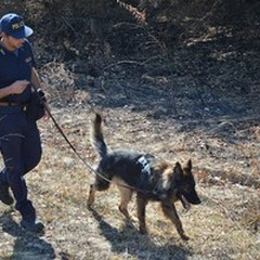 Scomparsa Vassalli, al lavoro i cani molecolari della Polizia