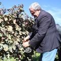 Puglia, Primarie centrosinistra: le dichiarazioni di Emiliano