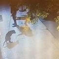 Pugno di ferro sulla vendita delle bibite in vetro da asporto e sulla rimozione delle deiezioni canine