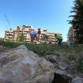 Domenica alternativa ad Andria, gli ambientalisti al bosco urbano