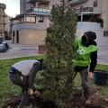 """L'associazione 3Place dona l'albero  """"Samuele """" al centro San Michele di Andria"""