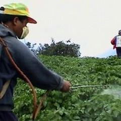 Maxi sequestro di fitofarmaci tossici: oltre 1.500 chili recuperati