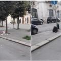 """Ancora rifiuti abbandonati in via Annunziata:  """"portate qui le fototrappole """""""