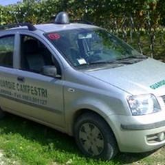 """Furti di olive: rinvenuti 4 quintali in un trullo in contrada  """"Lucrezia """""""