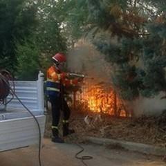 Incendi boschivi, 250 interventi in tutto il territorio