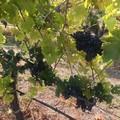 Le eccellenze vitivinicole andriesi a Düsseldorf dal 18 al 20 marzo 2018