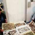 """Operazione """"ferragosto sicuro"""" della Guardia Costiera: al setaccio la filiera ittica"""