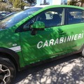 Si intensifica l'azione dei Carabinieri Forestali sulla raccolta funghi in ambito del Parco