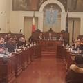 Crisi olivicola: il Consiglio comunale unito sostiene il comparto agricolo