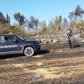 Indagini dei Carabinieri Forestali di Andria e Ruvo portano alla denuncia presunto autore incendio bosco Acquatetta