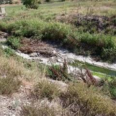 Pecore morte e rifiuti di ogni genere, ecco il Ciappetta-Camaggio