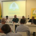 L'andriese Muraglia eletto presidente di PugliaOlive cui aderiscono 12 mila produttori