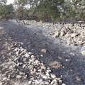 Distrutti circa 15 ettari di roverella, in contrada Pandolfelli