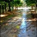 Irrigatori in funzione al mattino nella Villa Comunale, disturbo ai cittadini che passeggiano