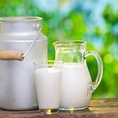 Il latte oro bianco di Puglia, oggi congresso ad Andria