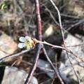 Albicocchi e mandorli in fiore: torna la primavera in Puglia
