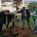 Celebrata la Festa dell'albero di Fareambiente Laboratorio di Andria