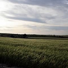 Ritrovato Giacinto Di Vietri nelle campagne andriesi