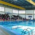 Nuoto e tanto agonismo per una bella giornata di sport alla piscina comunale di Andria