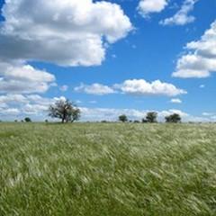 """""""Puliamo il mondo 2015 """", c'è anche il Parco dell'Alta Murgia"""