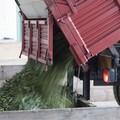 Cresce in Puglia nell'ultimo decennio la produzione di olio d'oliva