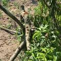 Danneggiamenti delle coltivazioni nel nord-barese, Galantino interroga il governo: «Subito provvedimenti»