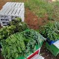 """La scuola  """"Verdi-Cafaro """" dona il raccolto dell'orto scolastico al Banco alimentare della vicina parrocchia"""