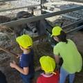 Riparte la scuola: a disposizione 300 aule nelle fattorie didattiche pugliesi