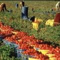 """La UILA: """"i voucher strumento senza tutele per i lavoratori agricoli"""""""