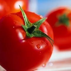 Il pomodoro:  l'imperatore degli ortaggi