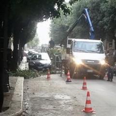 Potatura alberi: divieti al traffico in via Bruno Buozzi