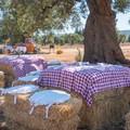 Fattorie didattiche: Un estate da far trascorrere ai bambini nella massima sicurezza, ben 4 nell' agro di Andria