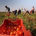 """Coldiretti Puglia:  """"Tutti i contadini sono caporali? Basta campagne denigratorie senza frontiere """""""