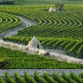 Agricoltura, perse in Puglia circa 30mila giornate di lavoro