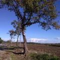 Contrada Abbondanza di Andria: una quercia monumentale da salvare