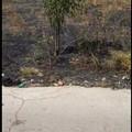Incendio di sterpaglia alle spalle della chiesa SS. Trinità, roditori invadono l'area circostante