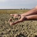Siccità in Puglia, secondo Coldiretti sale a 14 mln di euro il bilancio dei danni