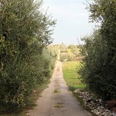 Ad Andria prestigiosa iniziativa di Italia Nostrae del Lions Club Puglia Scambi Giovanili