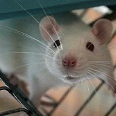 Sperimentazione animale: questo sconosciuto (parte IV)