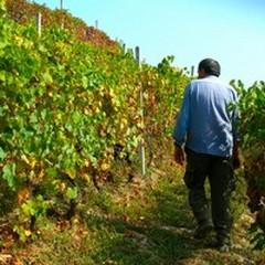 Regione Puglia, un nuovo bando per i giovani in agricoltura