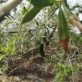 Gelate: Coldiretti, fuori la Puglia dal decreto calamità