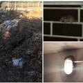 Topi in periferia, rifiuti in campagna: protestano i cittadini