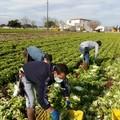 Rete lavoro agricolo di qualità, i sindacati chiedono all'Inps di riprendere le attività